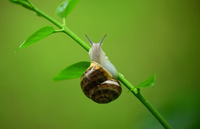 snail dream meaning