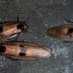 cockroach dream meaning